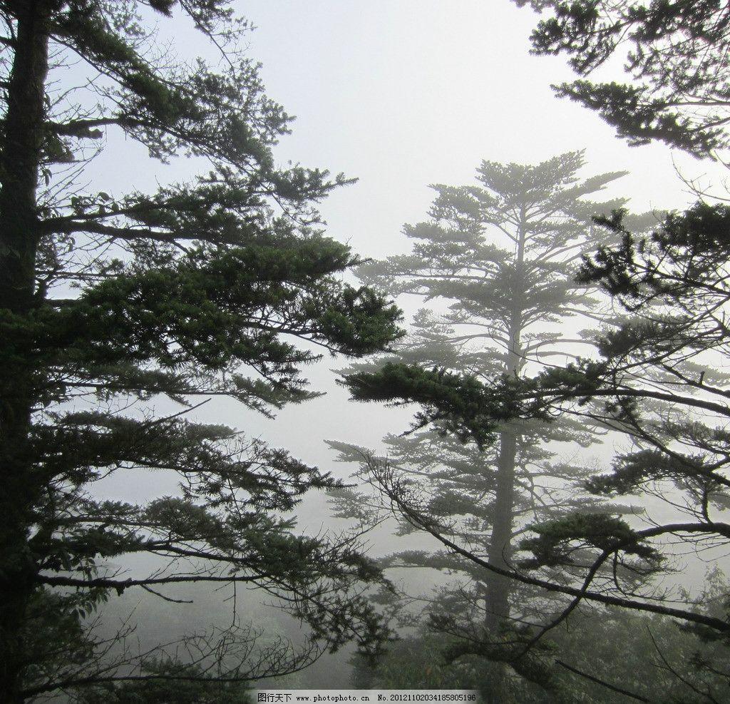 峨眉山 山林 树林 树木 林子 雾气 自然风景 旅游摄影 摄影 180dpi