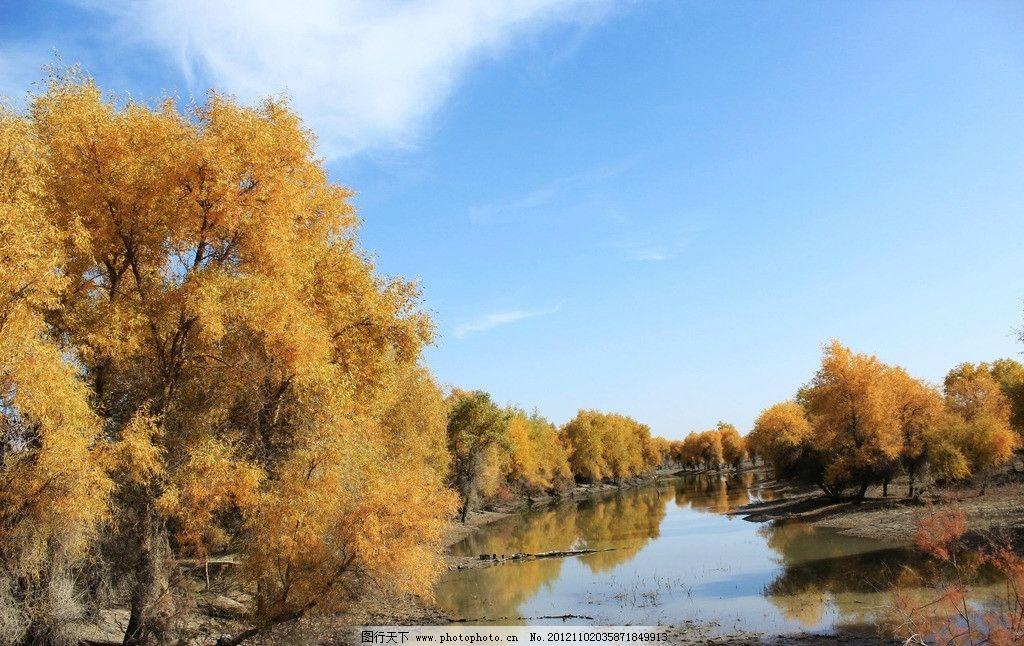 新疆轮台胡杨林 轮南 胡杨树 绿水 蓝天 白云 树木树叶 生物世界 摄影