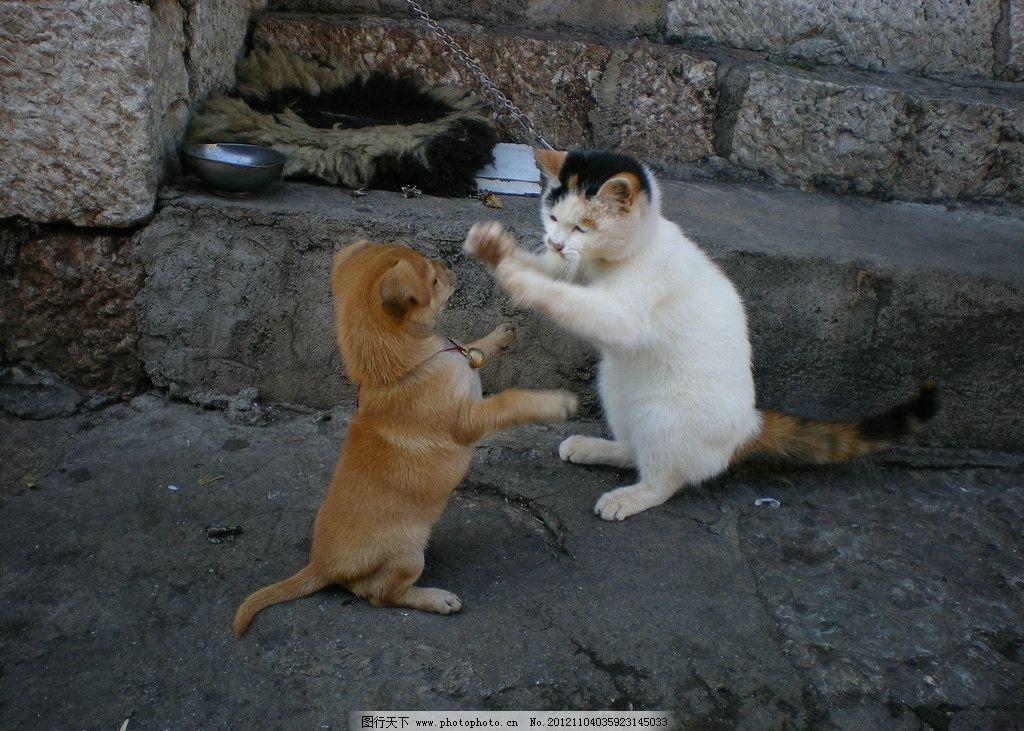 小狗 小猫戏架 可爱 小猫 小狗和小猫戏架 家禽家畜 生物世界 摄影 72