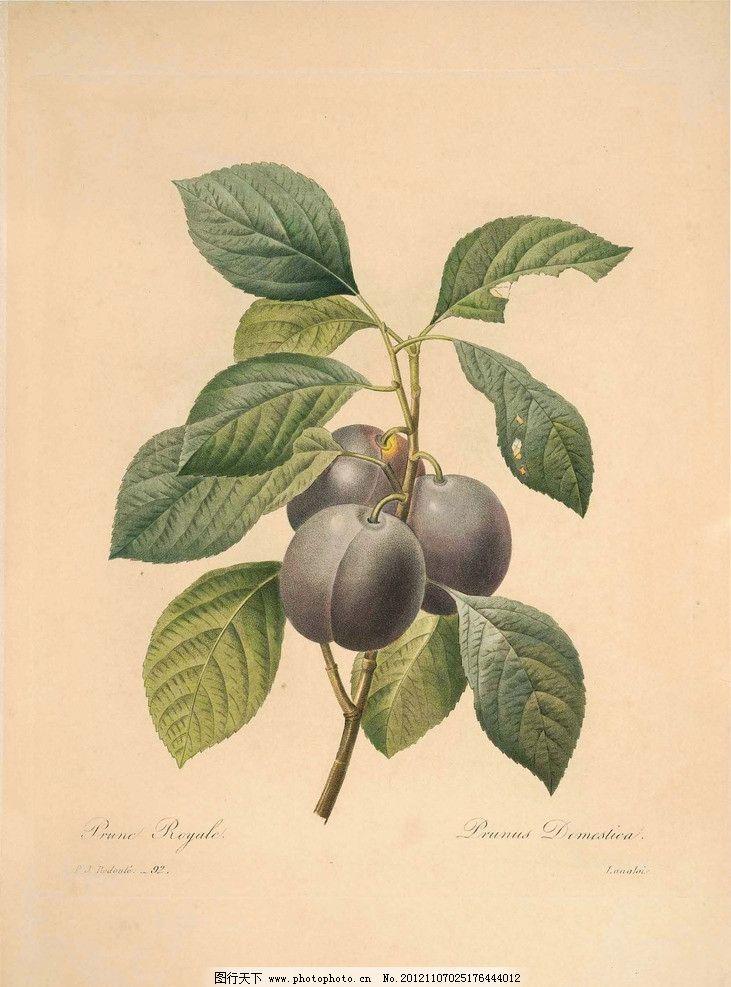 复古手绘 手绘植物 手绘花 复古 百香果 原生态 花草 生物世界 设计