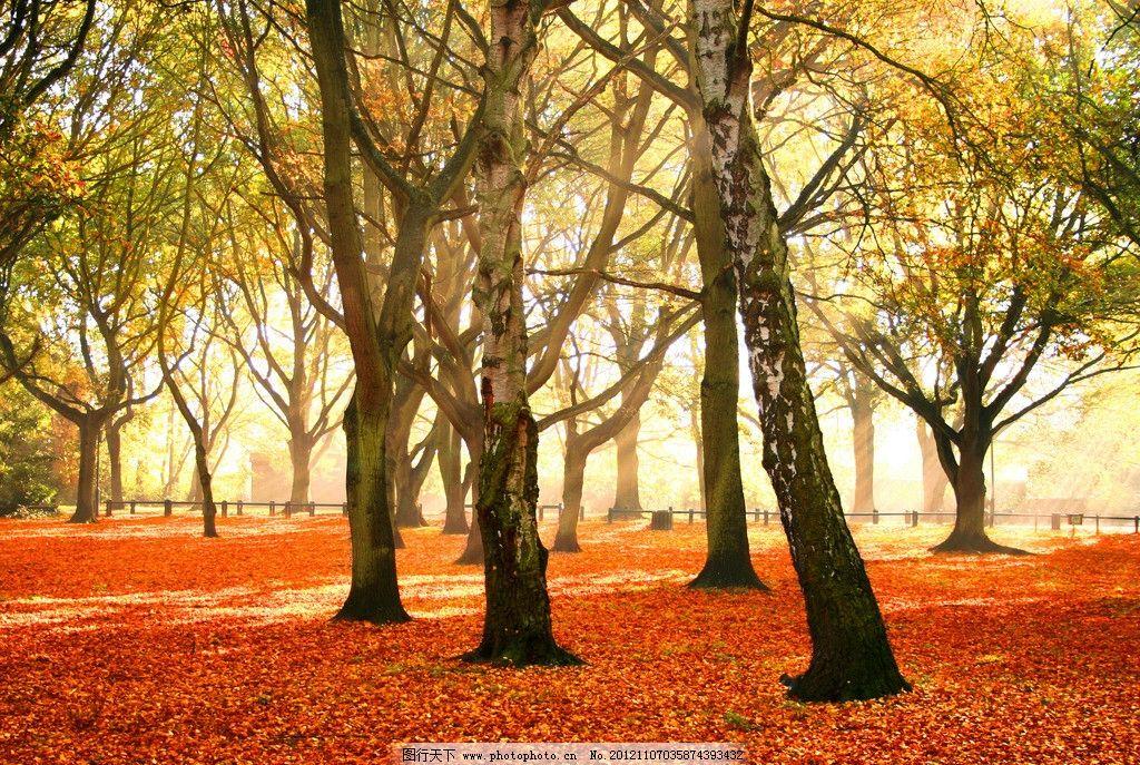 秋天 黄色 树林 秋景 初秋 秋冬 秋色 树木树叶 生物世界 摄影 300dpi