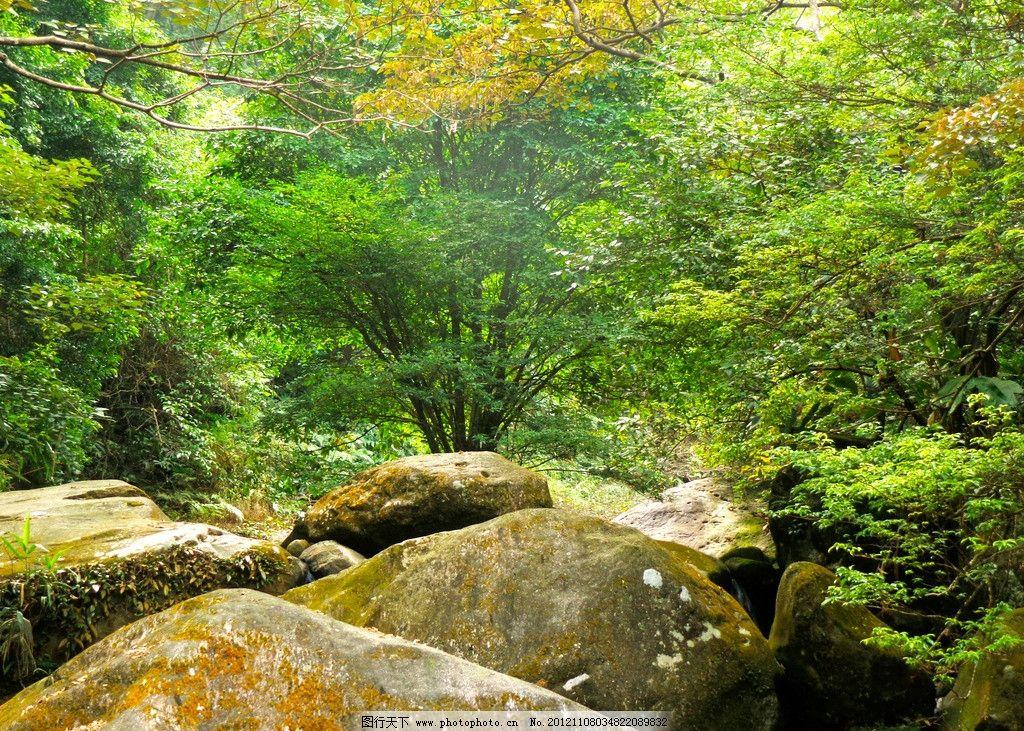 树枝基础树叶报告石头机械自然风景自然景观摄影350dpijpg溪谷设计树林的山谷图片