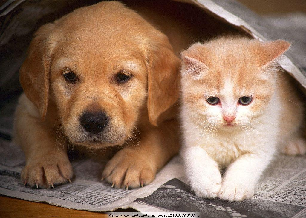 小猫小狗 小猫 小狗 可爱 家禽家畜 生物世界 摄影 72dpi jpg