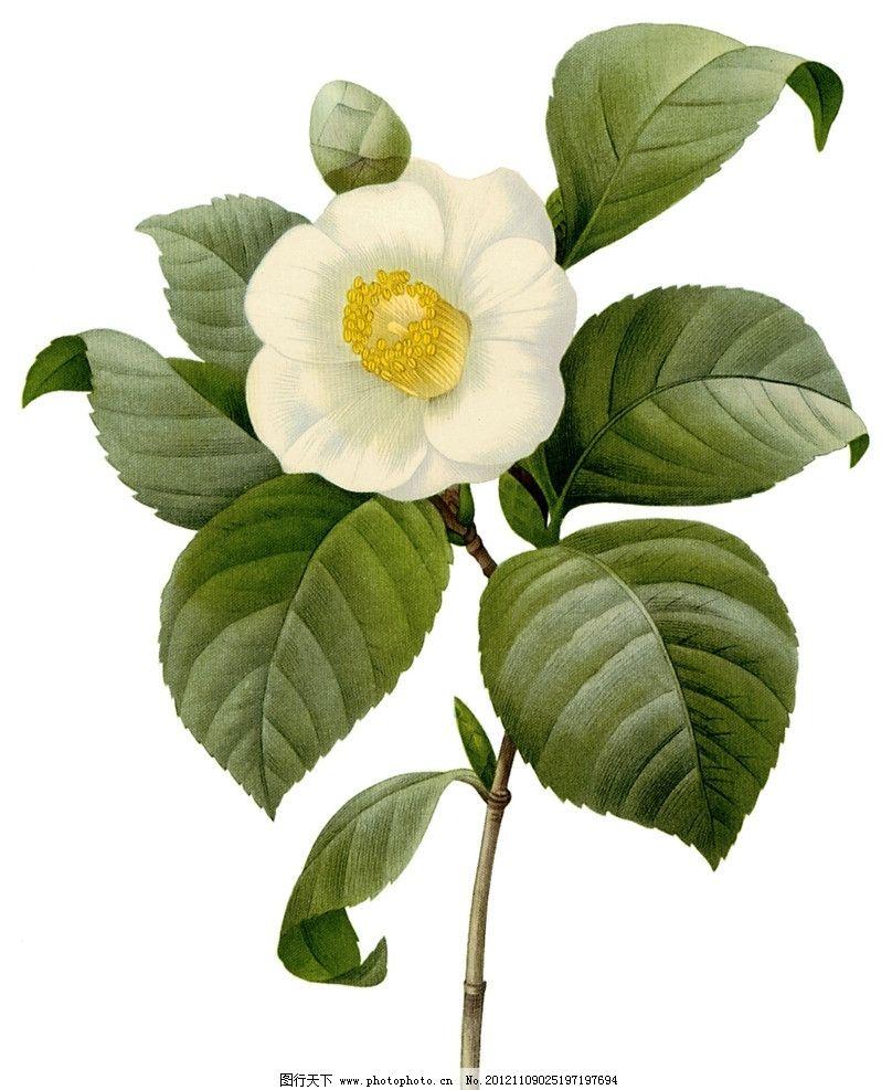 复古手绘花朵图片