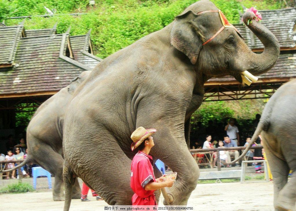 大象舞蹈图片_野生动物