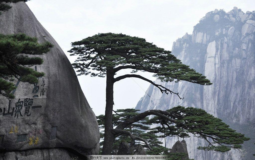 迎客松 黄山 黄山松 奇松 秀美黄山 自然风景 旅游摄影 摄影 300dpi