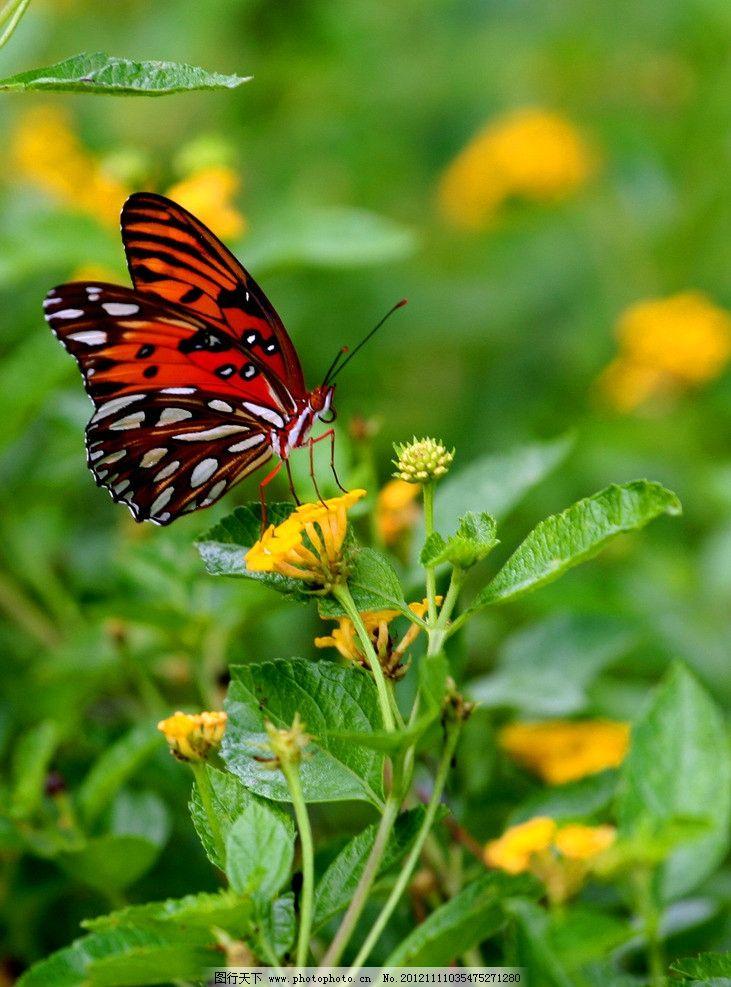 蝴蝶 动物图片 昆虫摄影 昆虫图片 蝶 漂亮的蝴蝶 蝴蝶素材 蝴蝶图片
