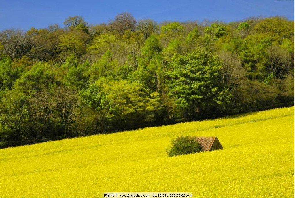田园风光 森林 麦田 小木屋 极致田园风光 自然景观 摄影 96dpi jpg
