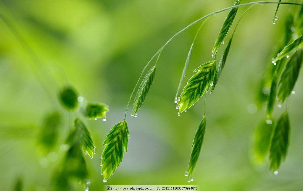 雨滴 绿叶 雨后 阳光 清新 生物世界 树叶树木 树木树叶 摄影 300dpi