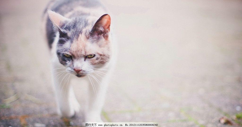 壁纸 动物 猫 猫咪 小猫 桌面 1024_539