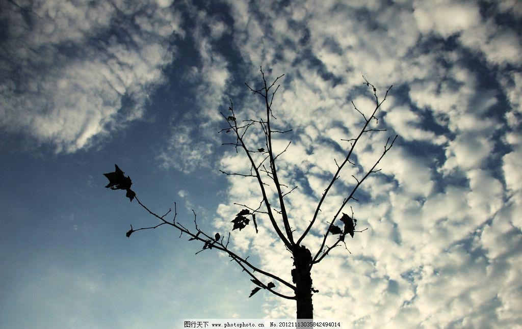 树枝 蓝天 白云 树木树叶 生物世界 摄影 72dpi jpg