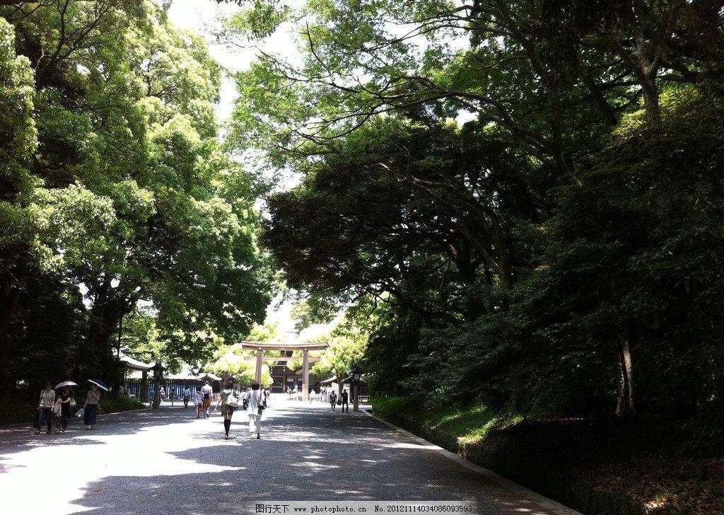 城市街道 日本 绿化 树木 草坪 城市 都市 马路 道路 小道 绿荫 树林