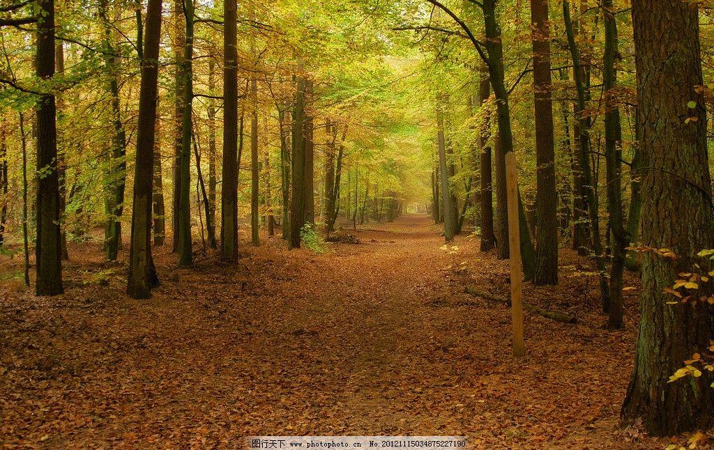 秋季林间小道 秋天 秋季 落叶 树林 森林 树木 道路 小路 自然风景 自