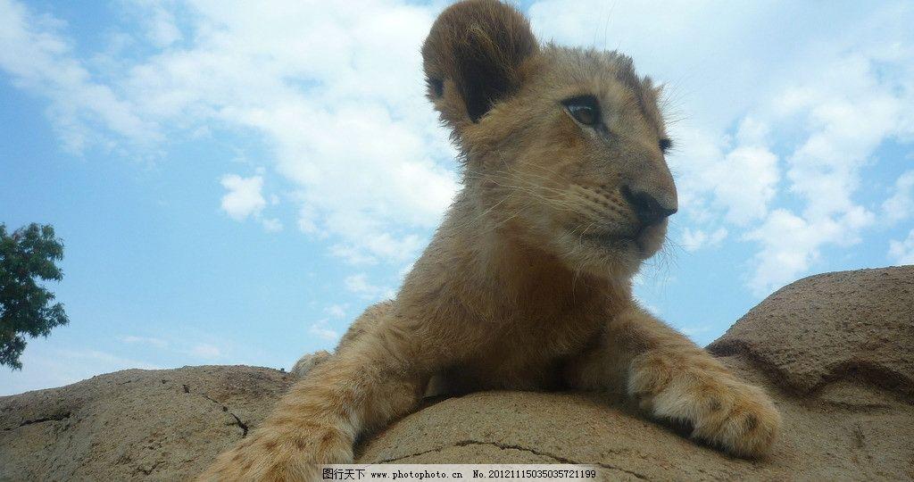 南非野生动物保护区图片