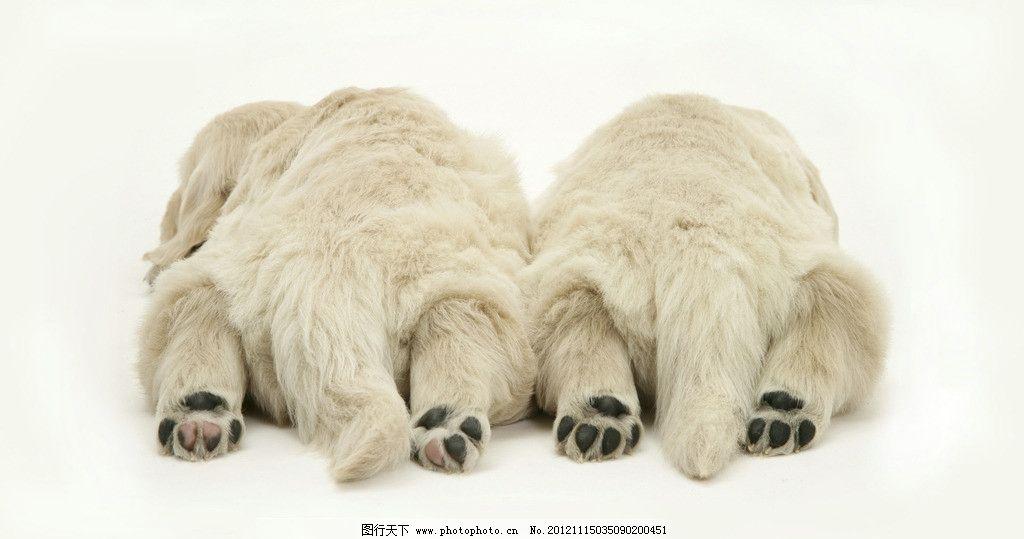 北极熊 野生动物 生物世界 白色 冰天雪地 背影 熊宝宝 野生动物世界