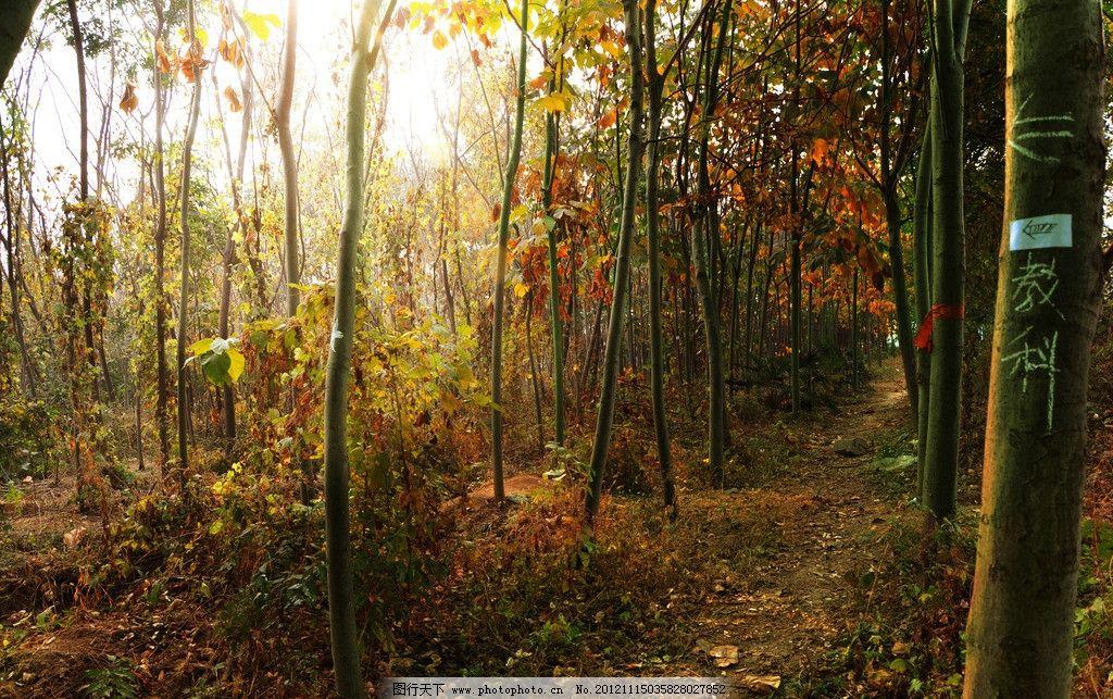 森林 校园小树林图片