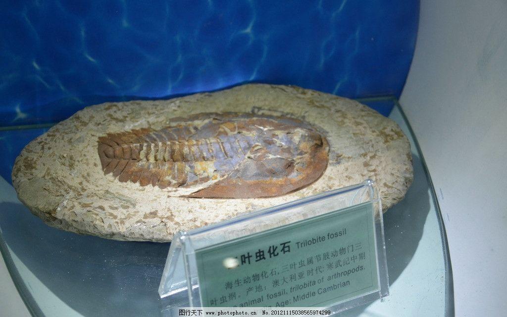 三叶虫 化石 节肢动物 寒武纪中期 海生动物 传统文化 文化艺术 摄影