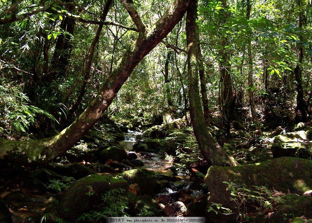 吊罗山雨林幽涧 海南旅游 森林公园 吊罗山国家森林公园 摄影