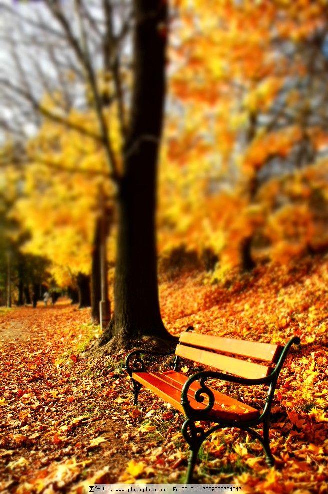 秋天长椅 公园风光 园林风景 椅子 秋季 落叶 枯叶 公园长椅