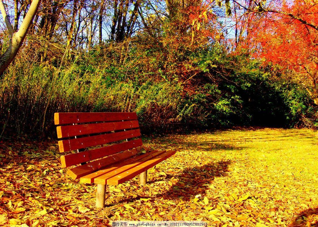 秋天长椅 公园风光 园林风景 长椅 椅子 秋天 秋季 落叶 枯叶 公园