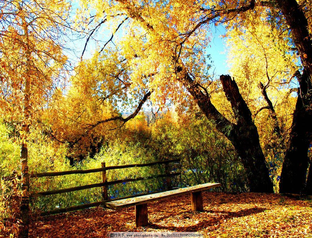 公园长椅 公园风光 园林风景 长椅 椅子 秋天 秋季 落叶 枯叶 长凳