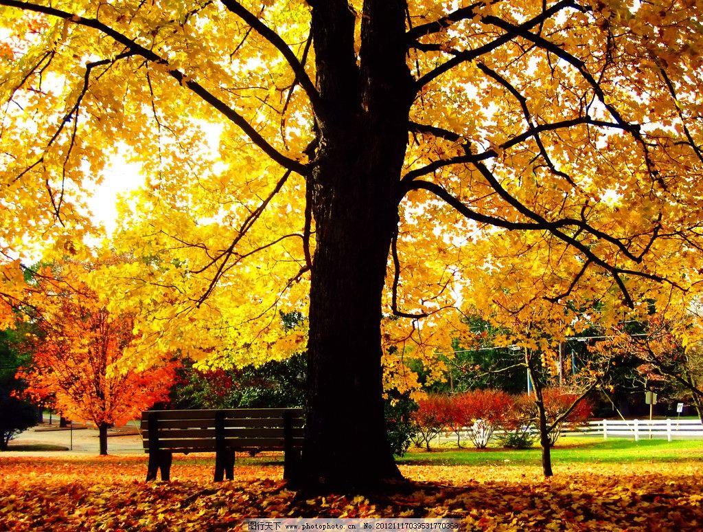 公园风光 园林风景 长椅 椅子 秋天 秋季 落叶 枯叶 公园长椅 长凳 树