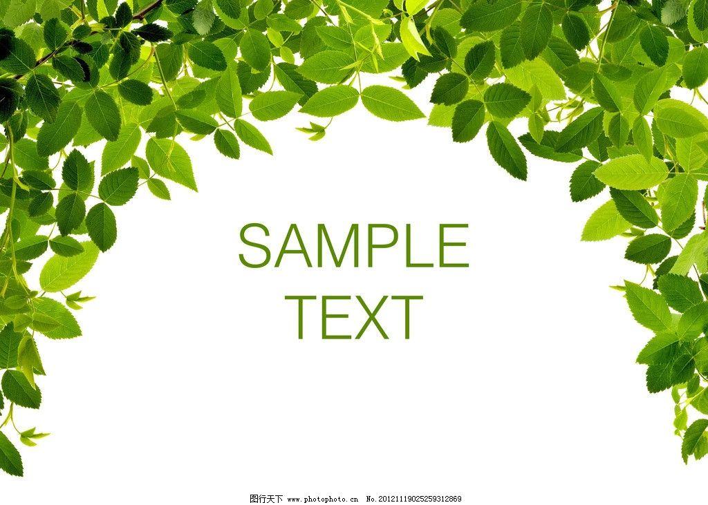 绿叶 叶子 树叶 树枝 树木 新鲜绿叶 树木树叶 生物世界 设计 300dpi