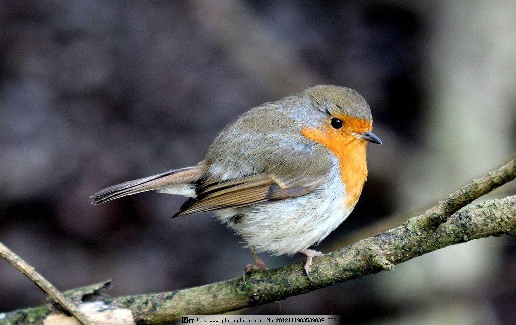 小鸟 鸟儿 麻雀 枝头 树枝 鸟类 生物世界 摄影 72dpi jpg