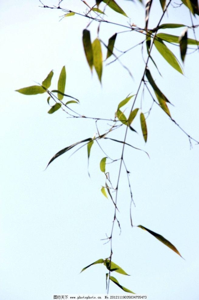 脚印像竹叶的动物