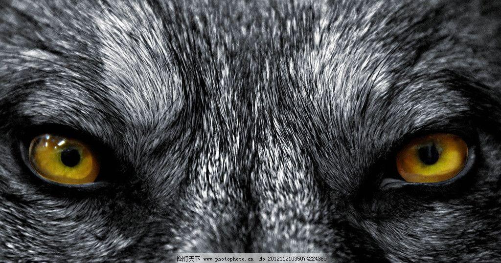 彩铅狼画法步骤