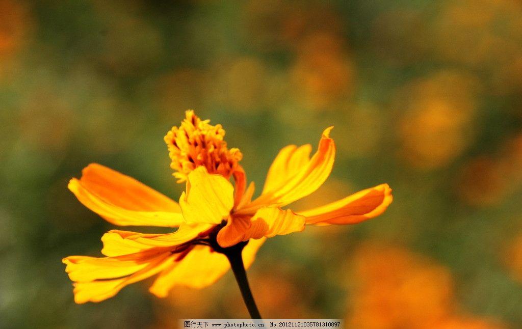 陽光下的小黃花 小黃花 小花 金色小花 陽光 花草 植物 鮮花 生物世界