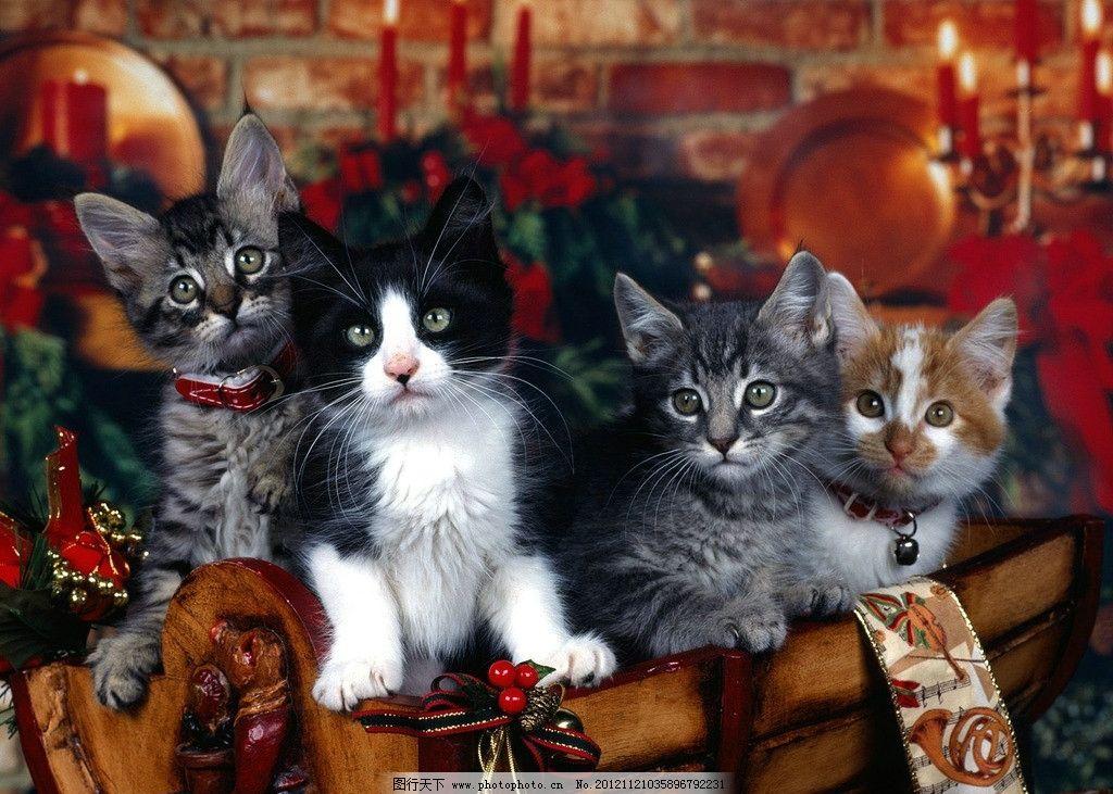 圣诞壁纸 圣诞节 节庆假日 节日 圣诞 壁纸 猫 节日庆祝 文化艺术