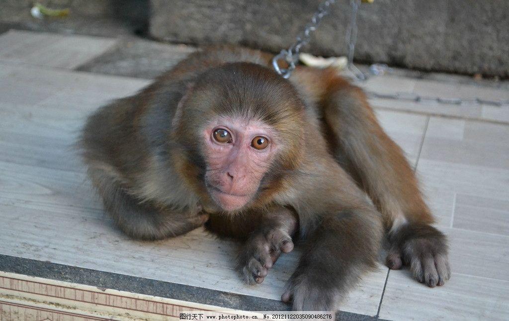 猴子 野生动物 生物世界 摄影 300dpi jpg