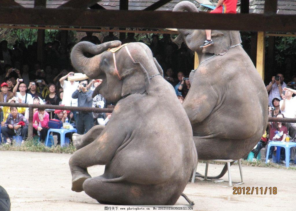 大象 大象表演 野生动物 生物世界 摄影 180dpi jpg