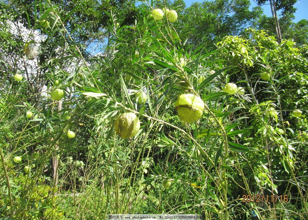 热带树 树木树叶 生物世界 摄影 180dpi jpg