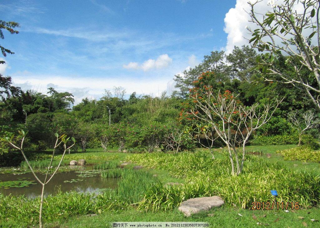 绿树 风景 园林风景 蓝天 树木 树木树叶 生物世界 摄影 180dpi jpg