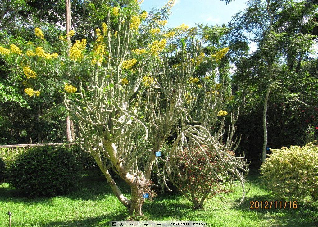 园林风景 仙人掌树 树木树叶 生物世界 摄影 180dpi jpg