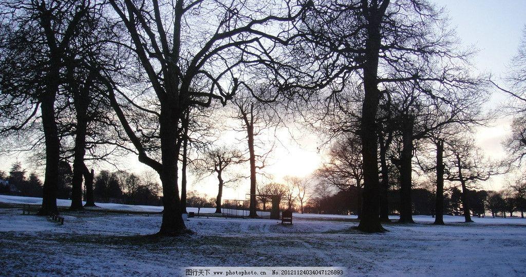 欧洲森林雪景 冬日阳光 冬天的树 清晨 国外旅游 旅游摄影 摄影图片