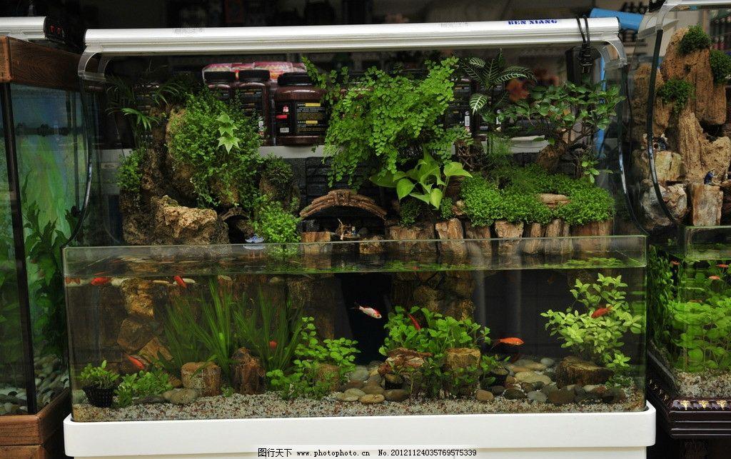 鱼缸 水景 鱼 盆景 假山 寿山石 绿植 花卉 花草 生物世界 摄影 300