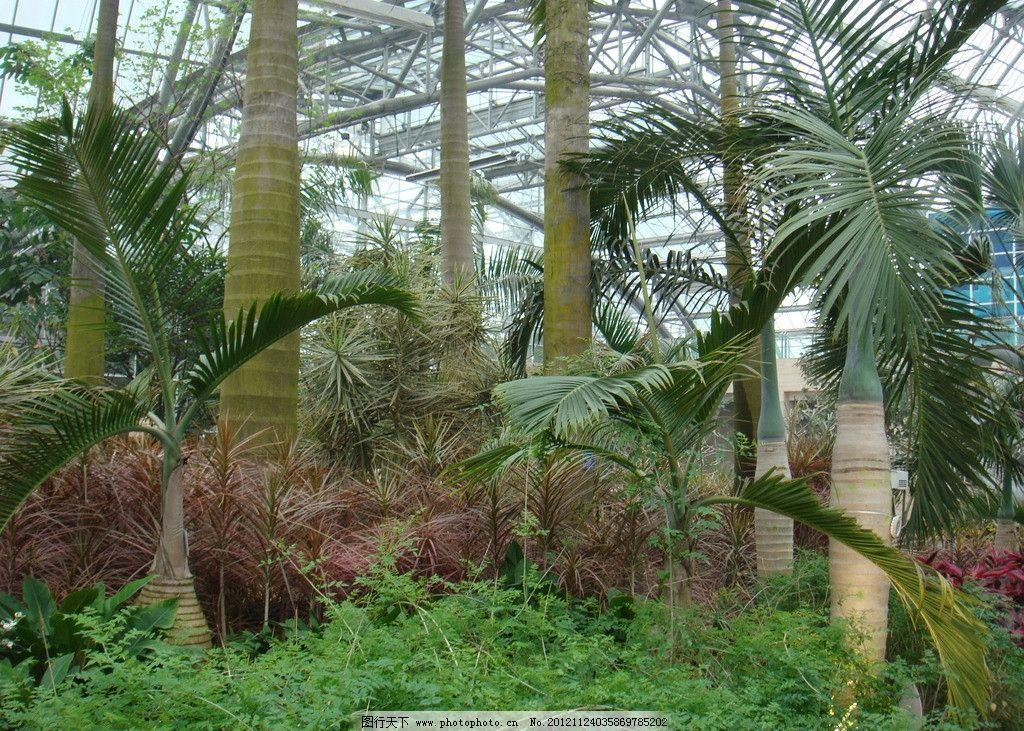 丛林 园林美景 大树 热带植物 树木树叶 生物世界 摄影 72dpi jpg