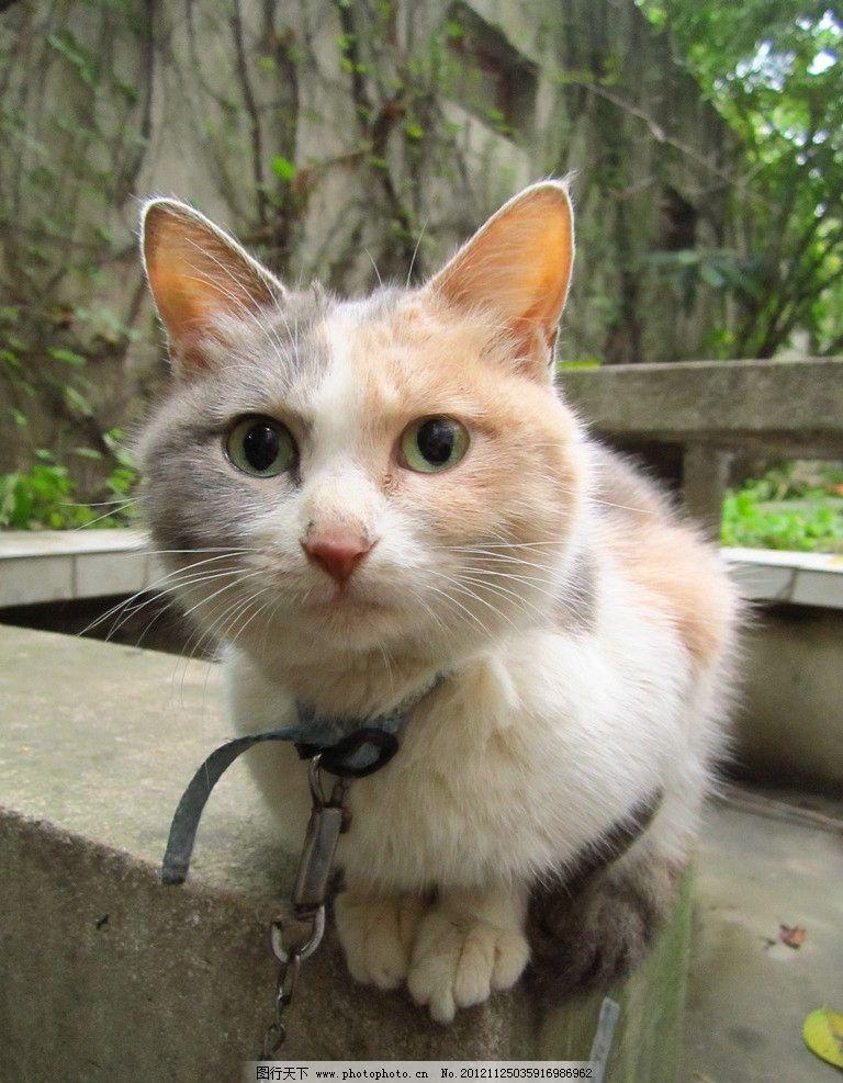 小猫 大眼睛 小清新 猫咪 猫猫 家禽家畜 生物世界 摄影 180dpi jpg