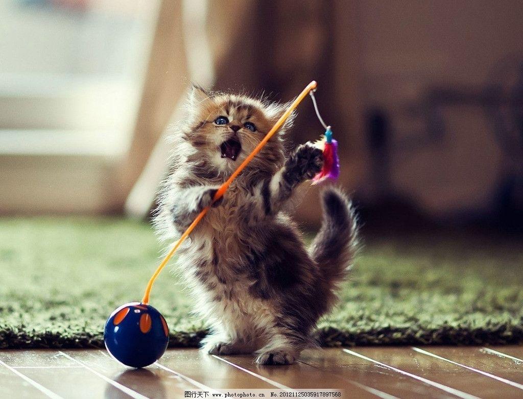 玩耍的猫 小猫 可爱 萌 壁纸 家禽家畜 生物世界 摄影 72dpi jpg