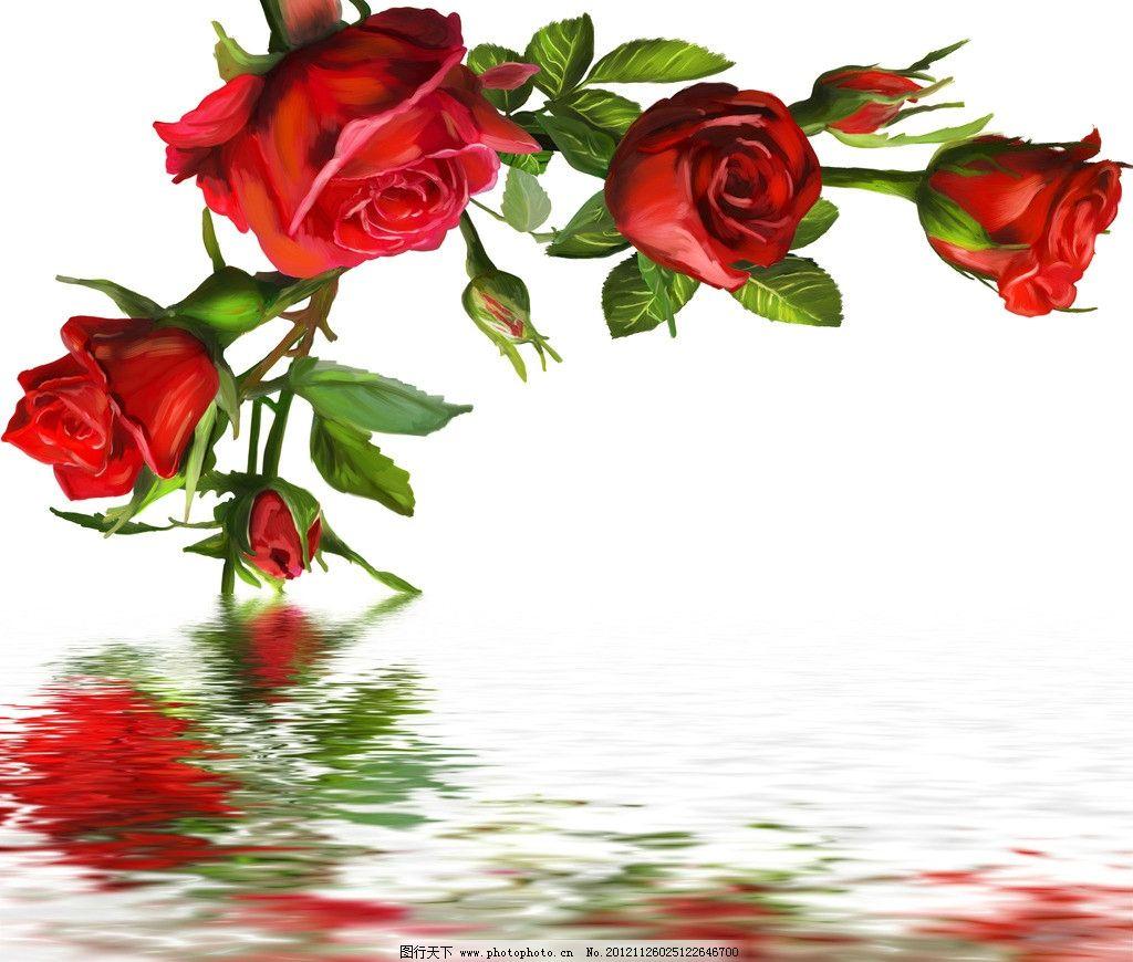 水中玫瑰 红色玫瑰 红玫瑰 水纹 倒影 油画 油画花卉 彩绘玫瑰花 红色