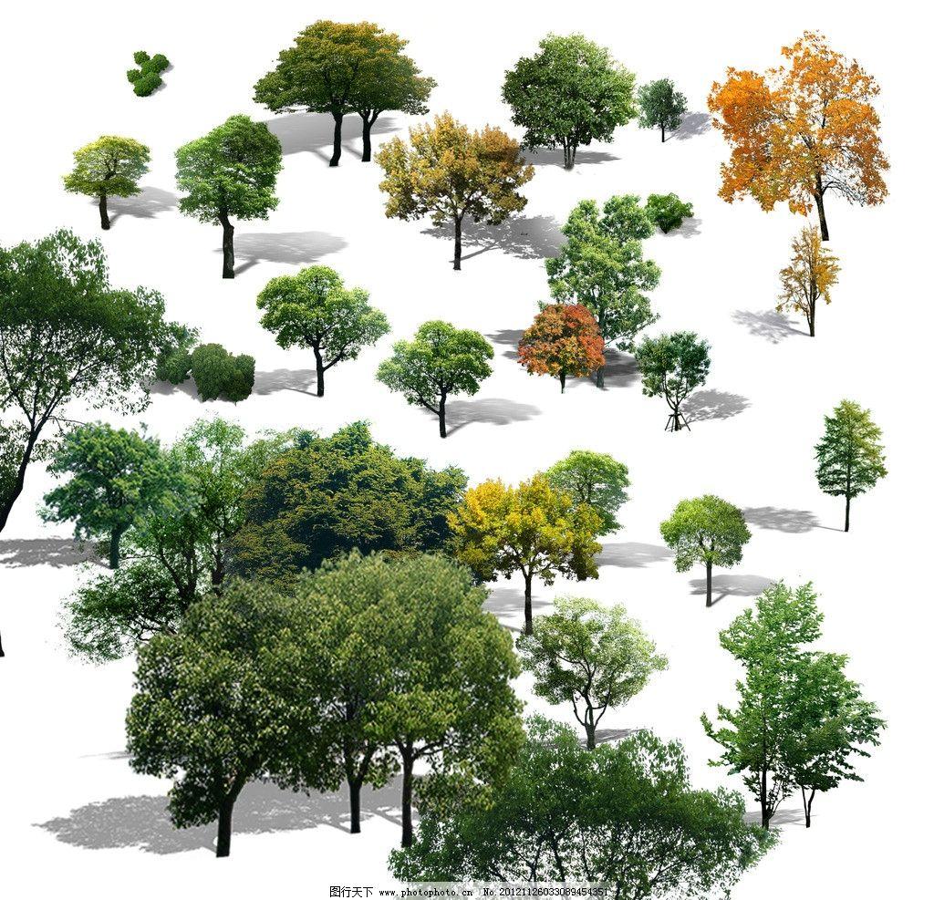 ps植物素材 立面树 植物ps 树ps 植物素材 树素材 psd分层素材 源文件