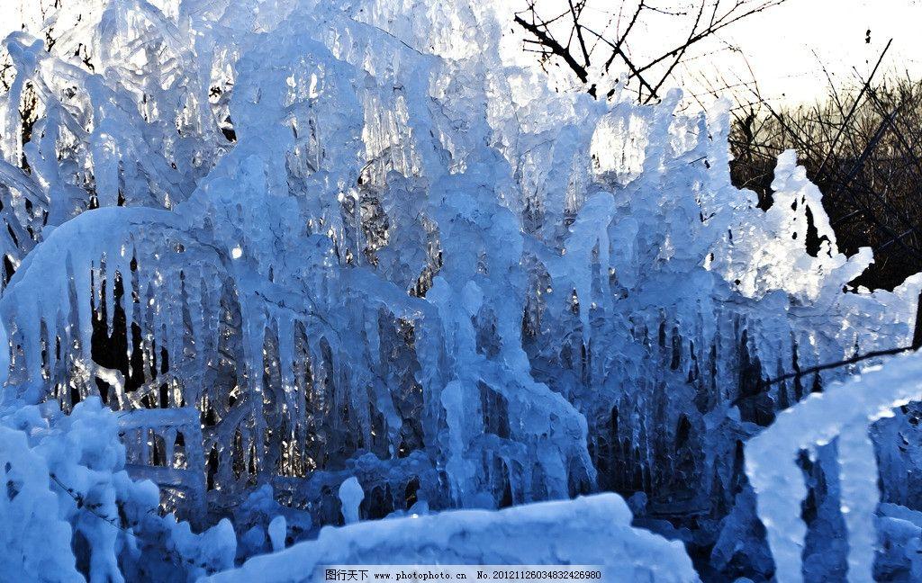 冰挂 水晶花 小树 小草 结冰 寒冷 树上冰挂 水晶树 雨凇 树挂