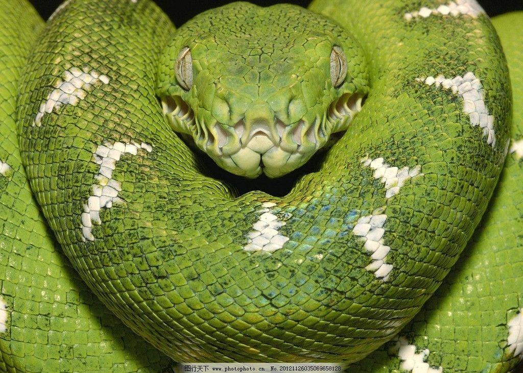 青蛇 野生动物 生物世界 摄影 72dpi jpg