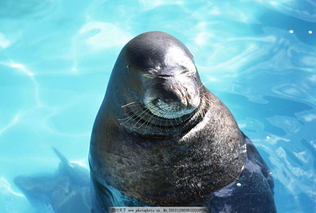 海豹 可爱 海狮 野生动物 保护动物 生物世界 摄影 360dpi jpg 海洋