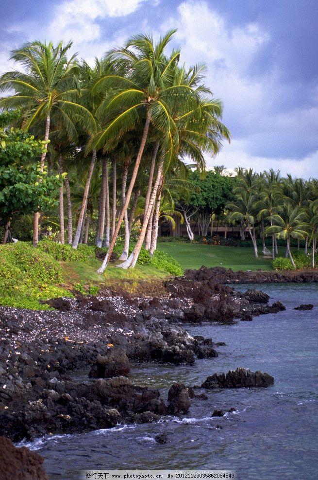 椰子树 摄影艺术 树木 海南岛 水边 植物 绿色 摄影 300dpi jpg 树木