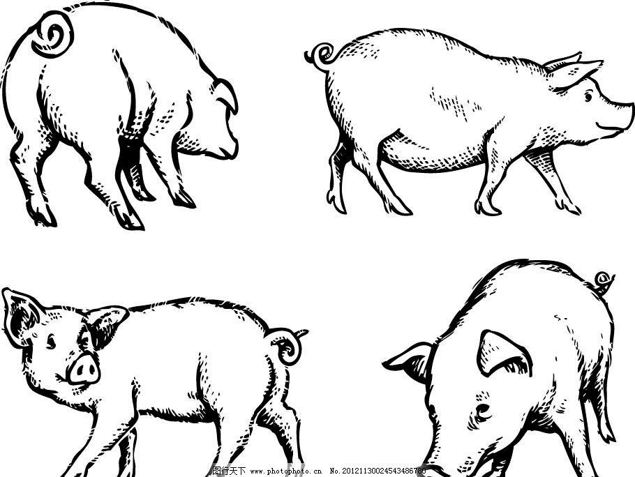 矢量猪 猪 线条猪 家禽家畜 生物世界 矢量 ai