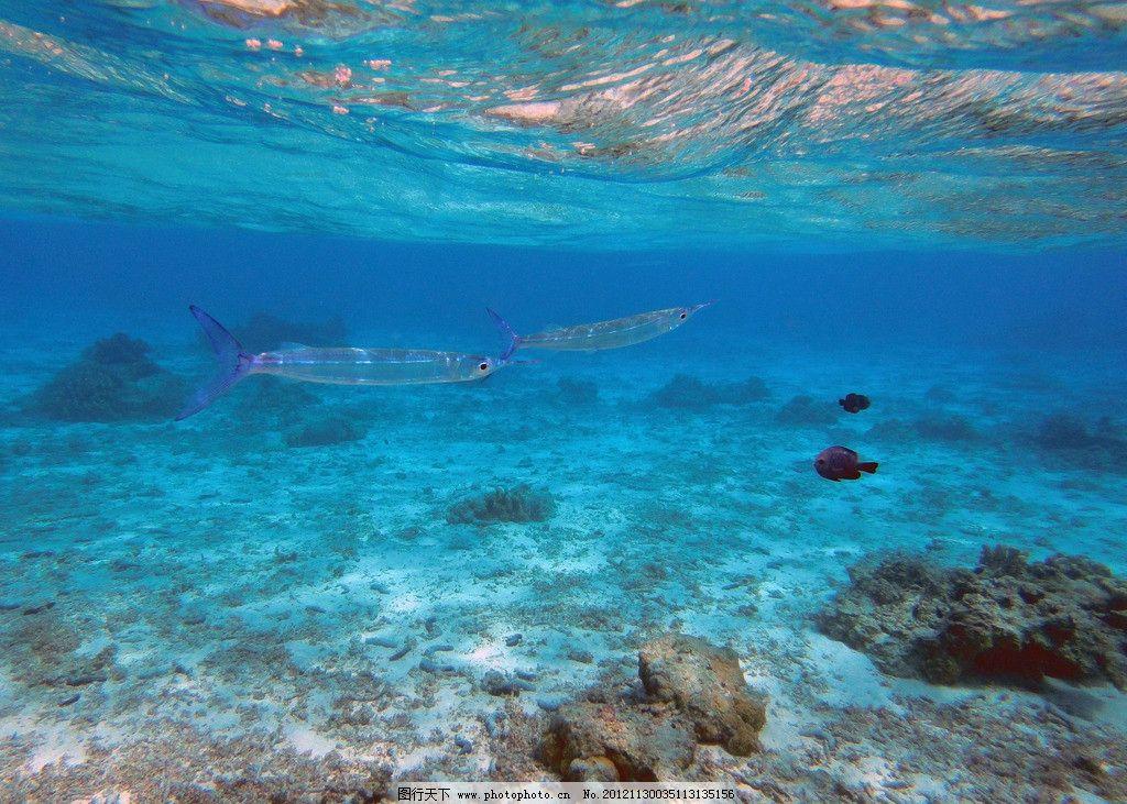海底世界 塞班岛 白沙滩 鱼群 蓝色海洋 海洋生物 生物世界 摄影 72